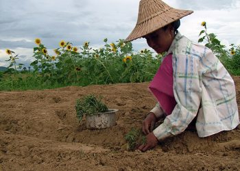 Chinese investment to develop major agribusiness projects