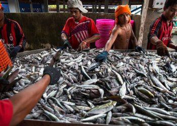 Myanmar raises efforts to export fishery products