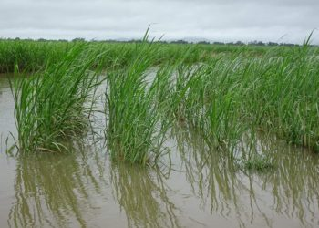 Less crop damage from floods this year